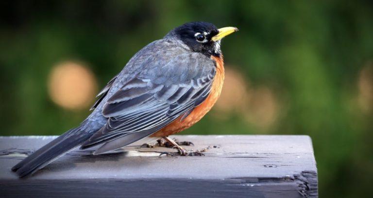 Taller de Observación de Aves