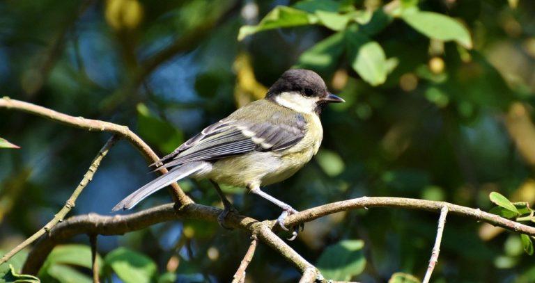 Ambiente de Pájaros